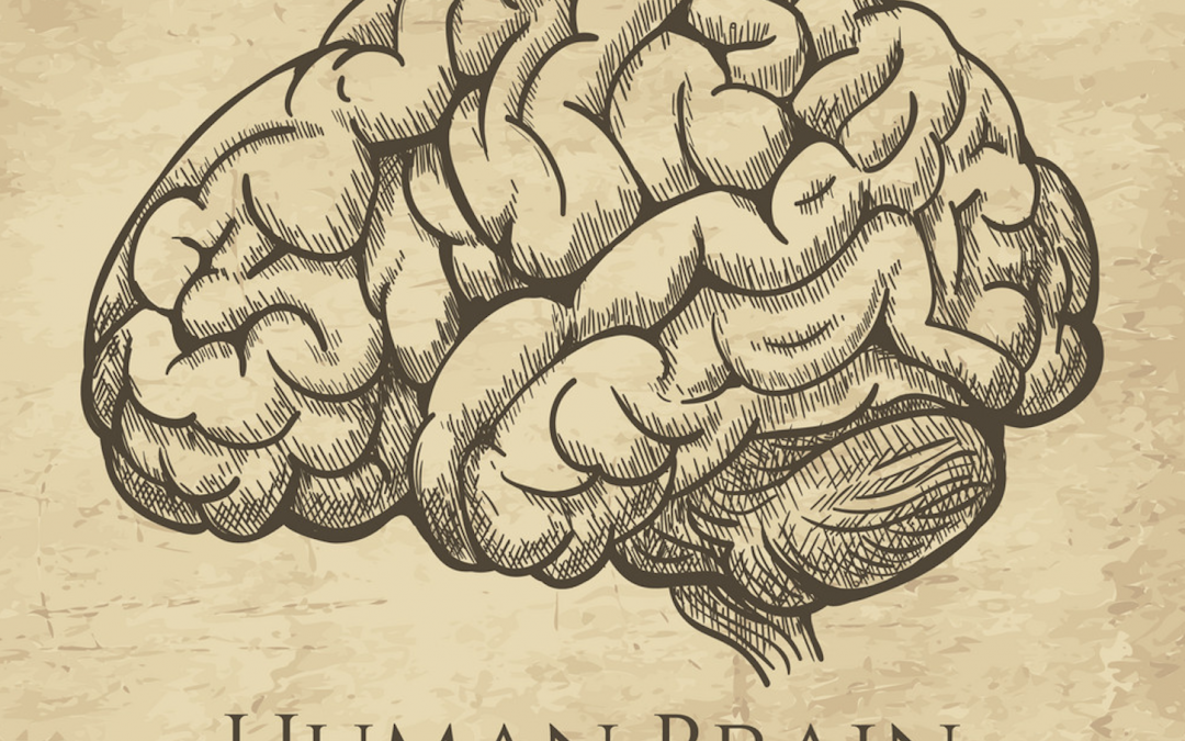 What Happens to our Brain as We Age?